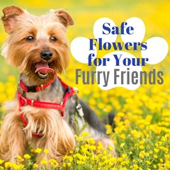Safe_Flowers_for_Your